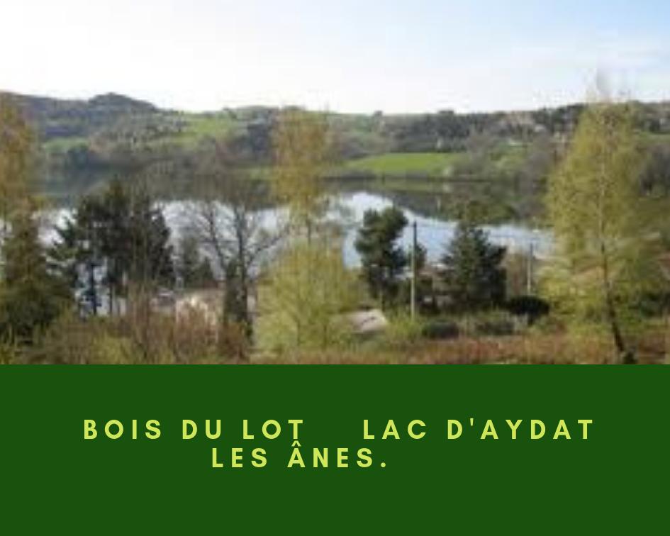 Bois-du-Lot_-lac-dAydat-_-les-anes.